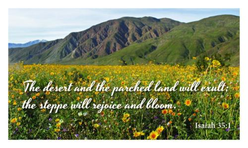 Advent-Blooming-Desert-Isaiah-35