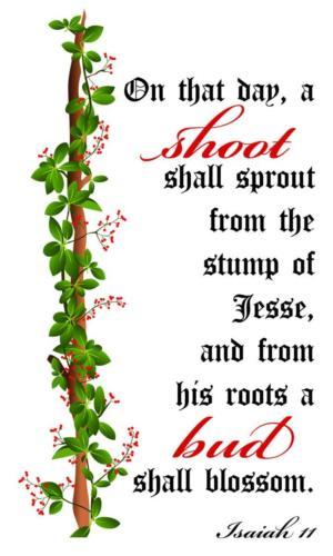 Advent-Vine-Isaiah-11